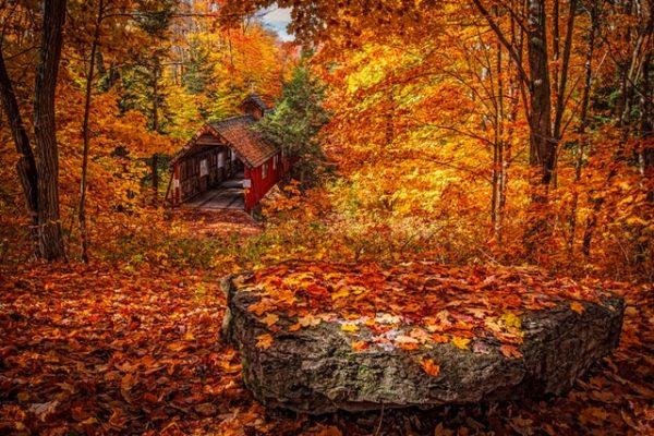 foliage: dove vederlo